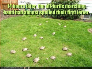 The All-Turtle Marching Band